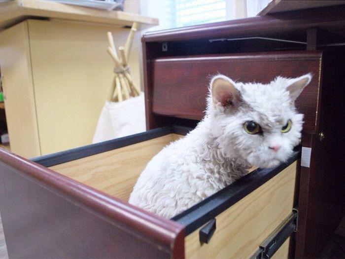 Conheça Albert, o gato mal humorado (4)