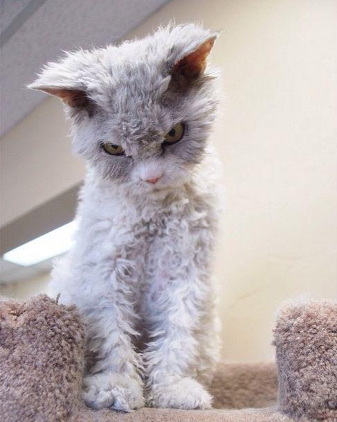 Conheça Albert, o gato mal humorado (6)