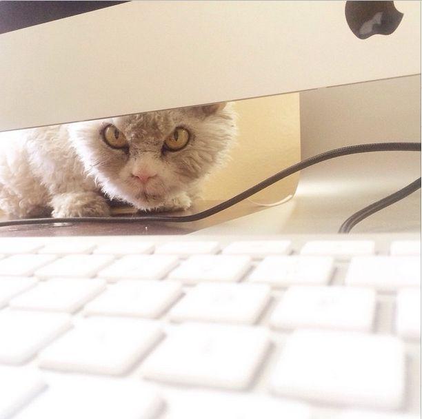 Conheça Albert, o gato mal humorado (8)