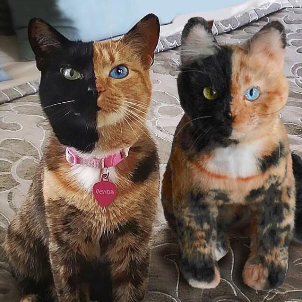 Empresa cria cópias idênticas, em pelúcia, de animais de estimação