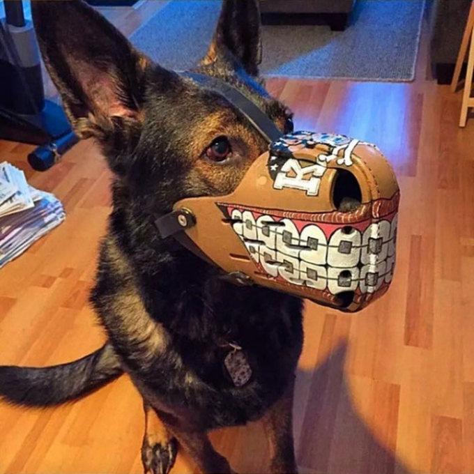 Focinheiras_customizadas_para_cães (11)