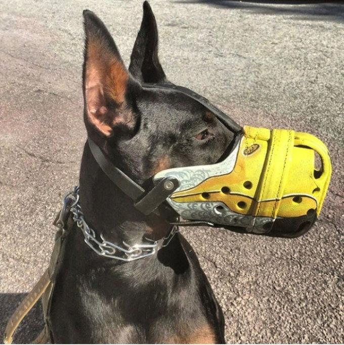 Focinheiras_customizadas_para_cães (13)