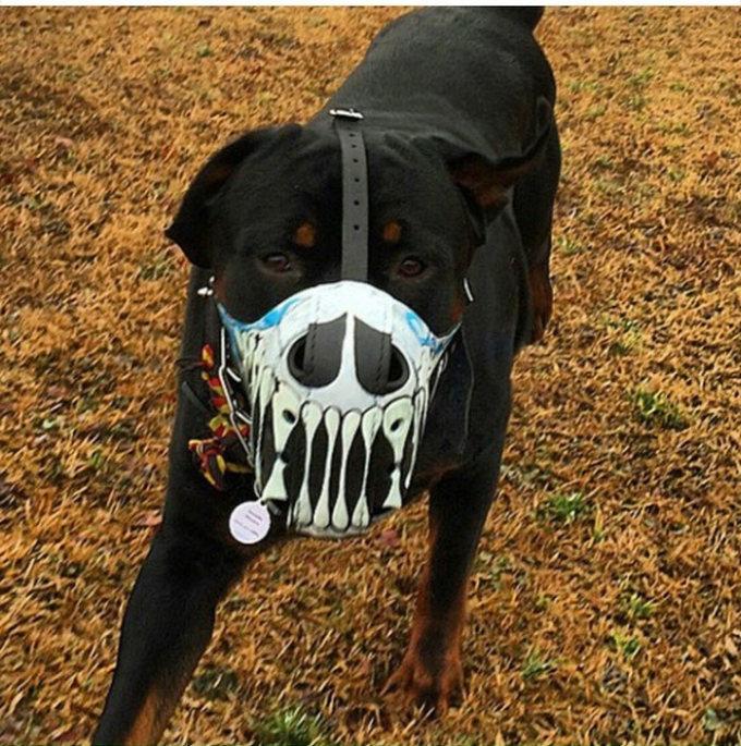 Focinheiras_customizadas_para_cães (18)