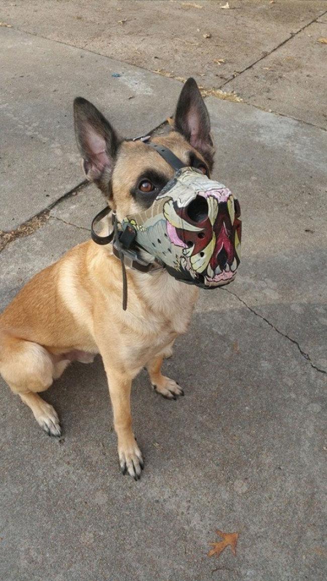 Focinheiras_customizadas_para_cães (8)