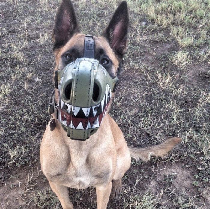 Focinheiras_customizadas_para_cães (9)