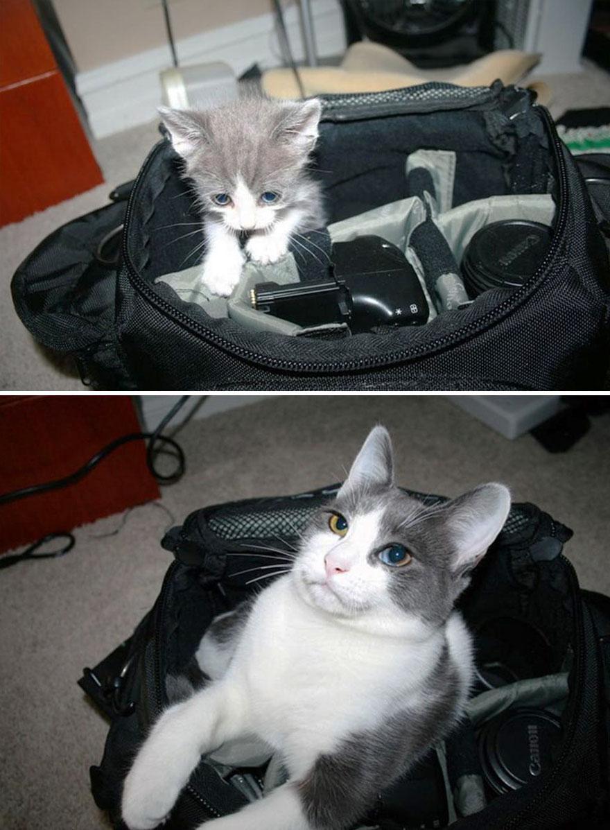 Fotos antes e depois de gatos crescendo (1)