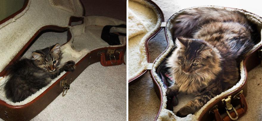 Fotos antes e depois de gatos crescendo (14)
