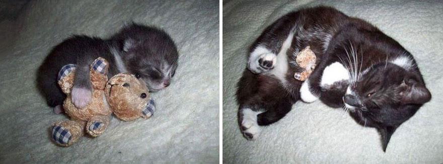 Fotos antes e depois de gatos crescendo