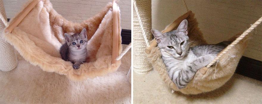 Fotos antes e depois de gatos crescendo (4)
