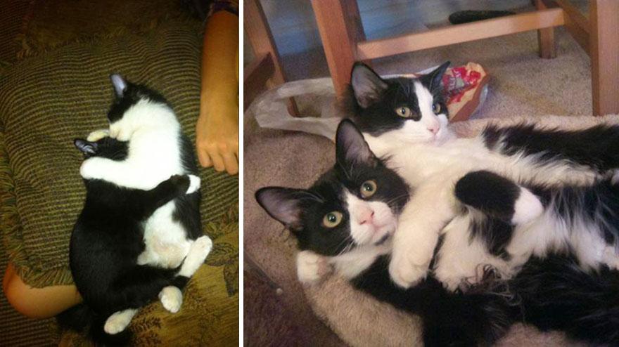 Fotos antes e depois de gatos crescendo (6)