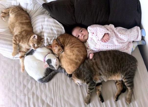 Fotos_Provam_Que_Seus_Filhos_Precisam_Um_Gato (8)