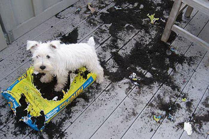 Fotos_que_provam_que_os_cachorros_também_sabem_sacanear (10)