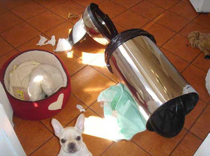 Fotos_que_provam_que_os_cachorros_também_sabem_sacanear (11)