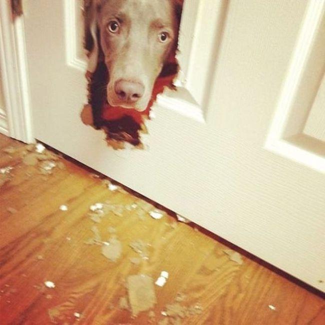 Fotos_que_provam_que_os_cachorros_também_sabem_sacanear (12)