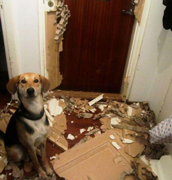Fotos_que_provam_que_os_cachorros_também_sabem_sacanear (13)