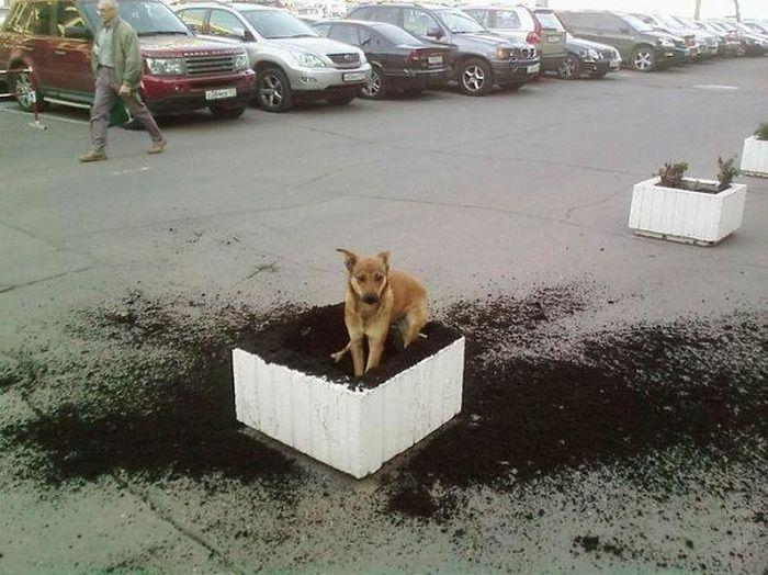 Fotos_que_provam_que_os_cachorros_também_sabem_sacanear (15)