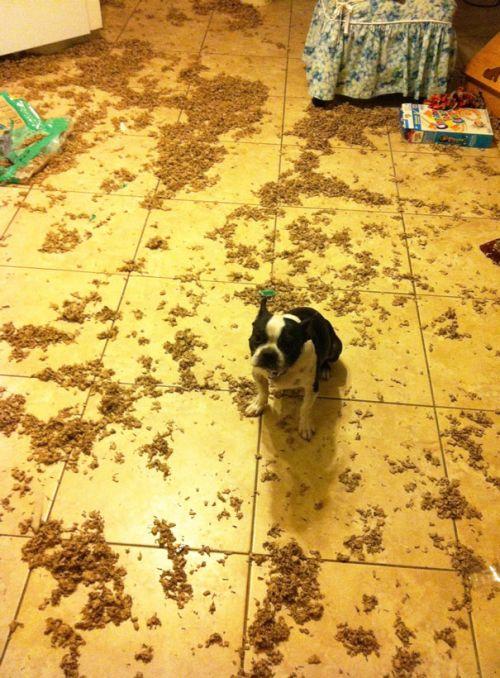 Fotos_que_provam_que_os_cachorros_também_sabem_sacanear (16)