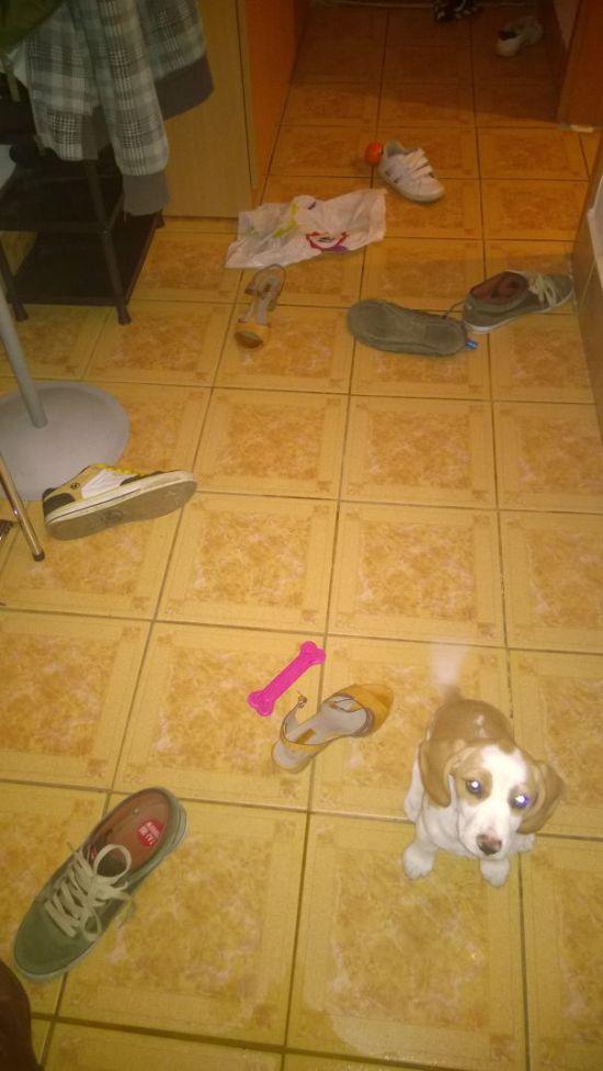 Fotos_que_provam_que_os_cachorros_também_sabem_sacanear (17)