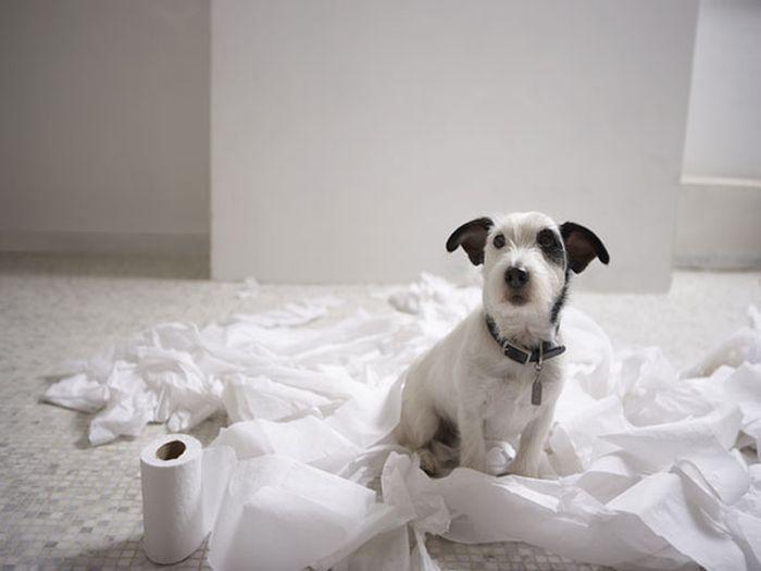 Fotos_que_provam_que_os_cachorros_também_sabem_sacanear (19)