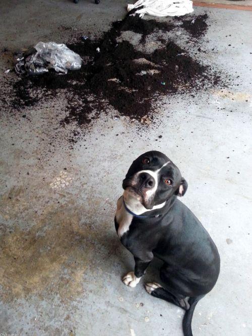 Fotos_que_provam_que_os_cachorros_também_sabem_sacanear (20)