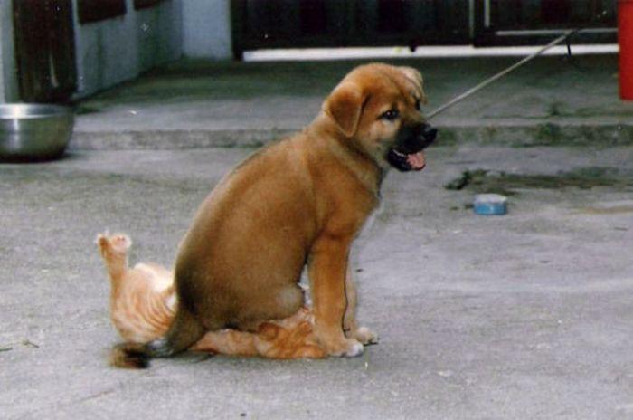 Fotos_que_provam_que_os_cachorros_também_sabem_sacanear (21)