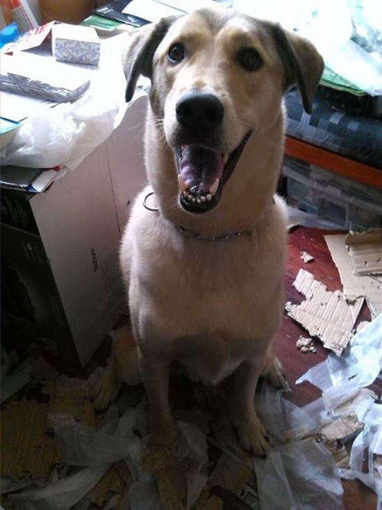 Fotos_que_provam_que_os_cachorros_também_sabem_sacanear (22)