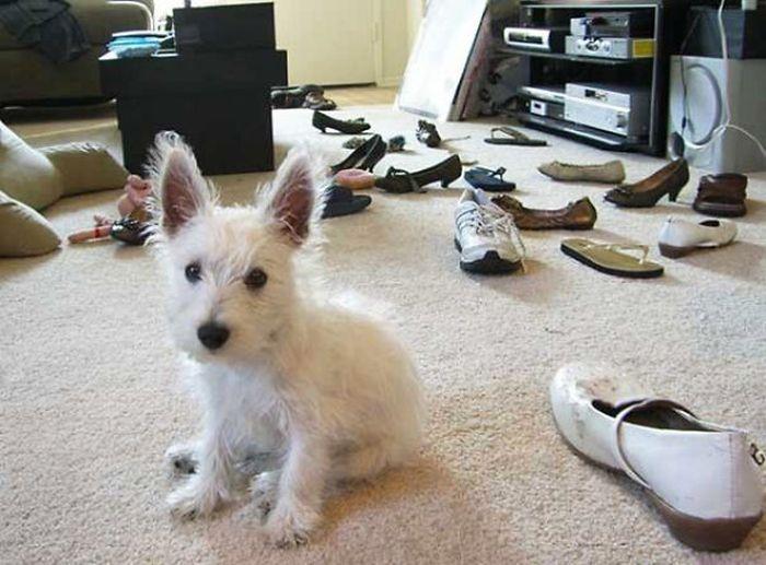 Fotos_que_provam_que_os_cachorros_também_sabem_sacanear (27)
