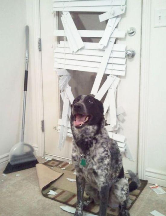 Fotos_que_provam_que_os_cachorros_também_sabem_sacanear (31)