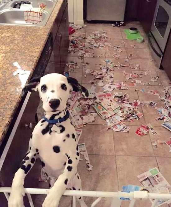Fotos_que_provam_que_os_cachorros_também_sabem_sacanear (34)