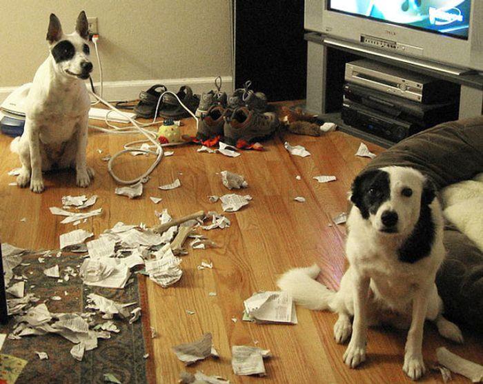 Fotos_que_provam_que_os_cachorros_também_sabem_sacanear (35)