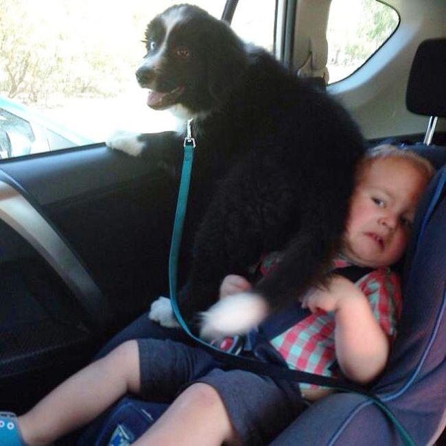 Fotos_que_provam_que_os_cachorros_também_sabem_sacanear (4)