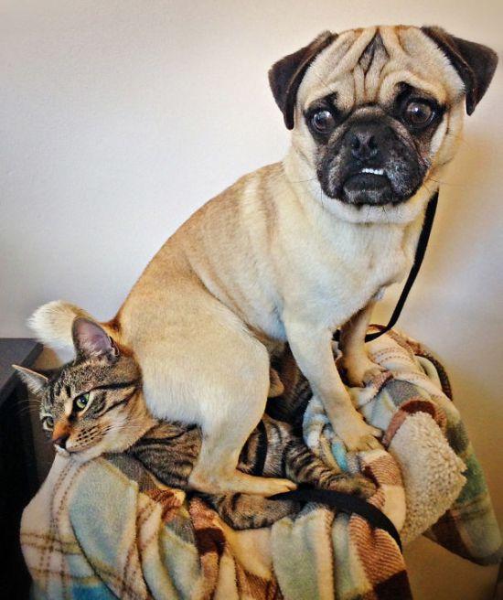Fotos_que_provam_que_os_cachorros_também_sabem_sacanear (6)