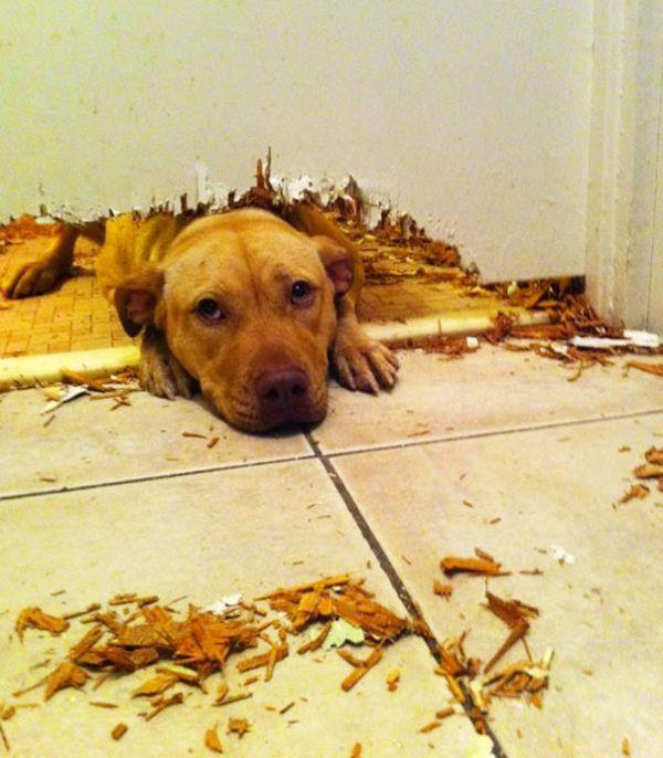 Fotos_que_provam_que_os_cachorros_também_sabem_sacanear (8)