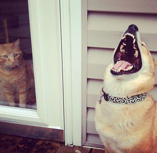 Fotos_que_provam_que_os_cachorros_também_sabem_sacanear (9)