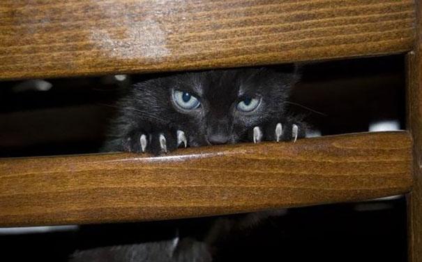Gatos que parecem estar bolando planos diabólicos (1)