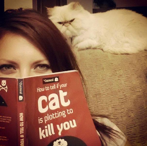Gatos que parecem estar bolando planos diabólicos (12)