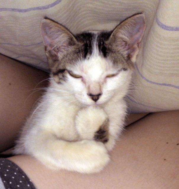 Gatos que parecem estar bolando planos diabólicos (13)