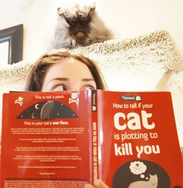 Gatos que parecem estar bolando planos diabólicos (19)