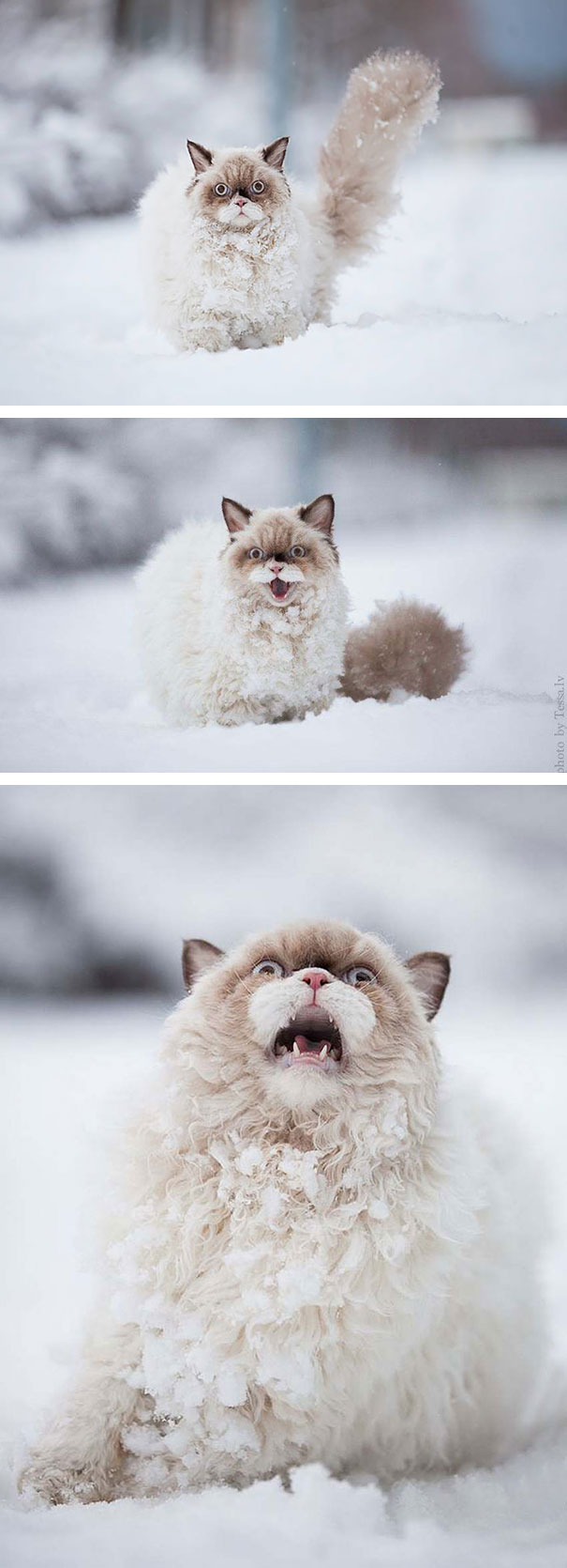 Gatos que parecem estar bolando planos diabólicos (3)