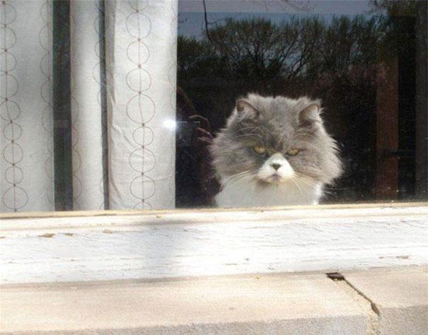 Gatos que parecem estar bolando planos diabólicos (5)