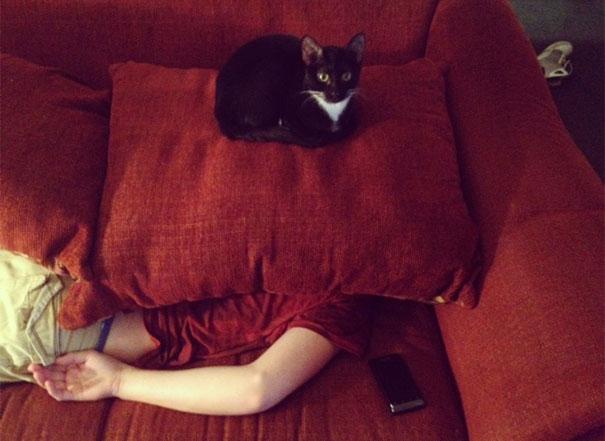 Gatos que parecem estar bolando planos diabólicos (7)