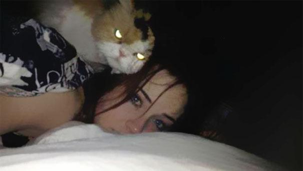 Gatos que parecem estar bolando planos diabólicos (9)