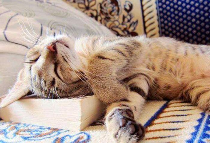 Gatos_que_querem_a_sua_atenção_no_momento_da_sua_leitura (10)