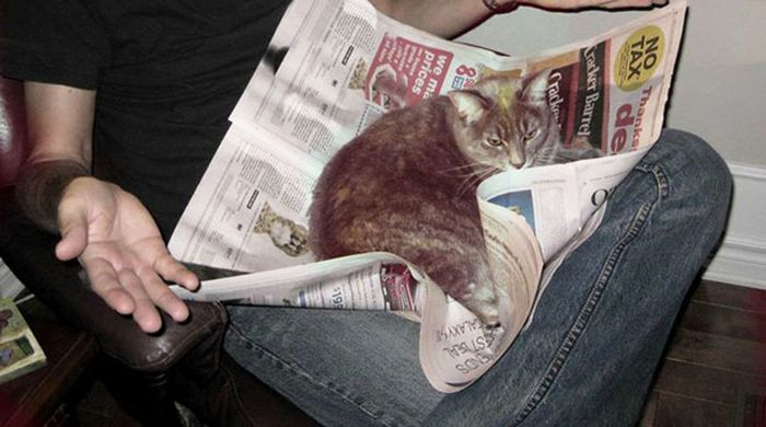 Gatos_que_querem_a_sua_atenção_no_momento_da_sua_leitura (12)