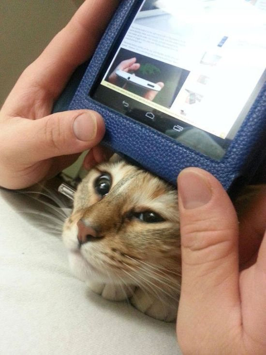 Gatos_que_querem_a_sua_atenção_no_momento_da_sua_leitura (13)