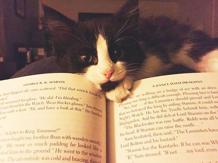 Gatos_que_querem_a_sua_atenção_no_momento_da_sua_leitura (14)
