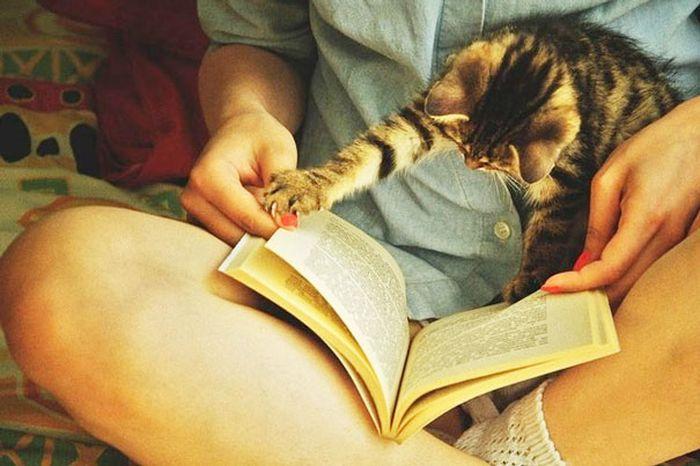 Gatos_que_querem_a_sua_atenção_no_momento_da_sua_leitura (15)