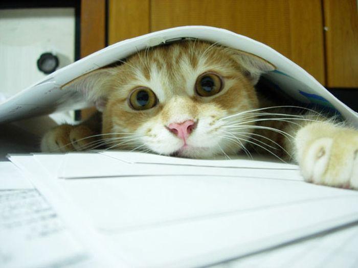 Gatos_que_querem_a_sua_atenção_no_momento_da_sua_leitura (16)