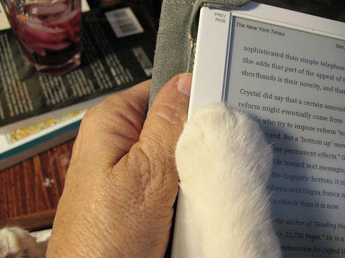 Gatos_que_querem_a_sua_atenção_no_momento_da_sua_leitura (17)