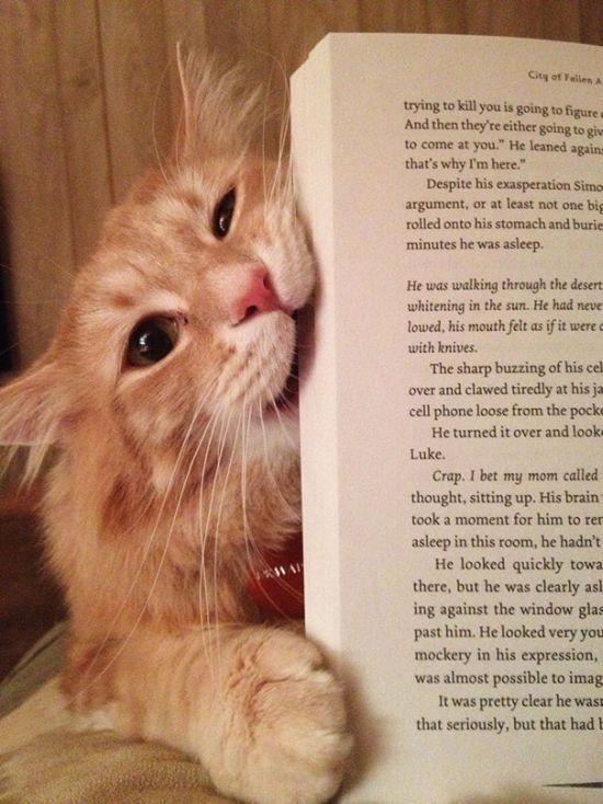 Gatos_que_querem_a_sua_atenção_no_momento_da_sua_leitura (19)